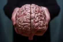 Human brain held in two hands